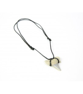 Large shark's tooth necklace